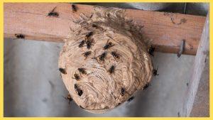comment se debarrasser dun nid de guepe sur le toit