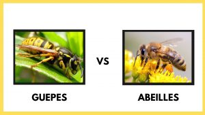 difference entre abeille vs guepes