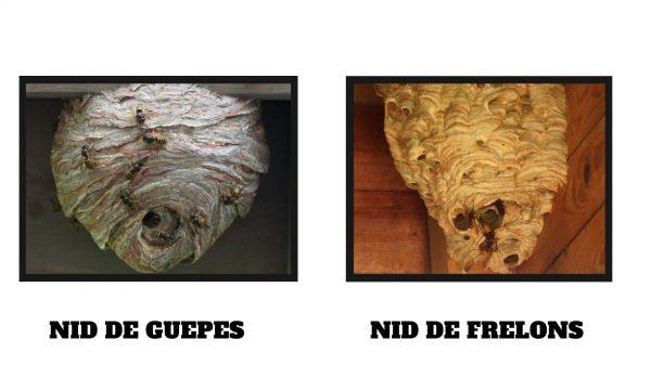 nid guepe vs nid frelon